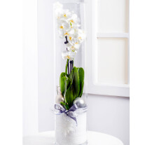 Modern Christmas Arrangement with Phalaenopsis